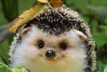 Cute Animals <3 / by Tasha Halldorson