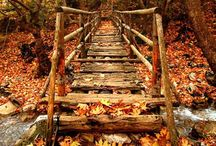 Fall Thyme / || fall thyme ||