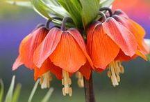 Flowers / by Pam Boyer