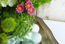 Spring Thyme / || spring thyme ||