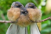 Birdies / by Pam Boyer