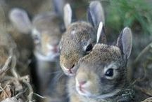 Love Ya  a Rabbit~~(s) / Ahh~A Rabbit is One of Natures Cutest Creature~ I Love them!! / by Helen Cornett