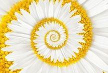 Spirals unfurling / A celebration of spirals in the natural world and art
