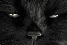 Want a Black Cat? I do!!! / Black Cats~Not Bring Me Bad Luck! / by Helen Cornett