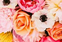 Blooms / flowers, bouquets, blooms