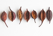 seeds and pods / by Kaysinee Koonsap