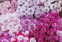 Flowers / by Taylor Anne Adams