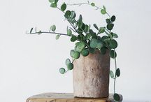 Plant Mom - greenery as home decor for natural spaces / from pretty decorations to edibles
