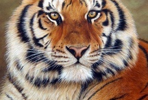 the most beautiful animal