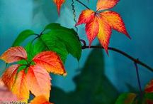 Color Inspiration / by Yvonne Johnson