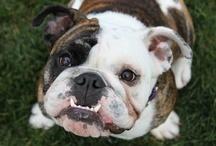 Canine Breeds LT Loves