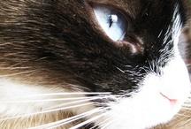 Feline Photography LT Loves