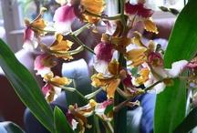 Lia fotografie: Orchideeën