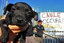 qualazampa.news / cronaca, storie, arte, gossip, moda ma... solo da cani