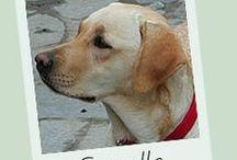 Pet...izioni / Fai sentire la tua voce per i cani! Dai voce al tuo amico a quattro zampe