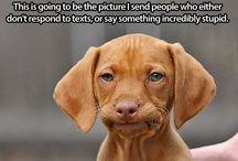Things that make me laugh... :) / by Sara Jones