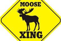 Moose!!!!