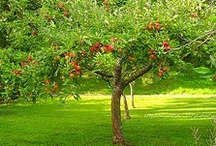 Nature: Apple Picking / by Anne Woodard