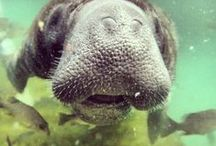 Manatee lovers / We love and care for the manatees in the Natural Wonder.
