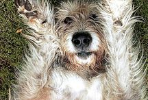 Irish WolfHound / Pictures to remind me of big baby Atlas. Mr. love bug