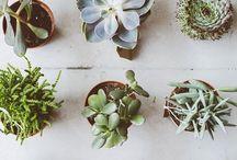 P L A N T S / plants/pots/