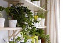 rooms&plants