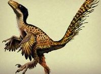 Dinosaur Visualisations
