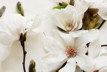 Flowers / by Jeanne Bay