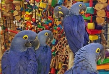 Our Birds / The Largest Selection of Exotic Bird.  We have everything you will ever need for your companion bird. Bird cages, Food, supplies, & toys. We also offer individual bird training, bird grooming & boarding, disease testing, and micrchip ID implants. Call us today 302-684-4101 info@mdbirdfarm.com - email www.mdbirdfarm.com