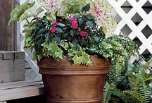 Container plants / by Becky Howeth