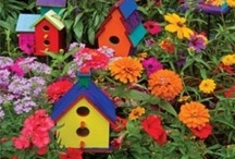 For the Birds / I love, love, love birdhouses & cages! / by Jayne Shaw