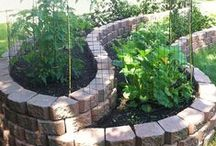 Vegetable Garden / by Heidi Nieling (Speckless)