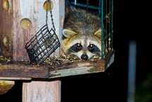 Animals / by Chris Lockwood