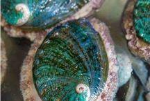 ~Glass & Shells of the Sea~ / Seashells & sea glass~ / by Nancy Alane Eikenberry