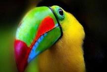 Birds I love