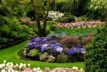 Gardens/Landscape / by Mary Anne Giampapa