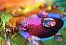 I love COLORS .ME / I love COLORS is about all the colorful imagery that makes you stop in your tracks and say WOW! It is so delicious visually that you can taste it just like eye-candy.  I love COLORS is a mix of colorful images that inspire this Pin Board.  / by Bendrix