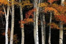 Autumn | Feel / The many moods of Fall.