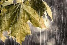 Tut-tut, it looks like rain