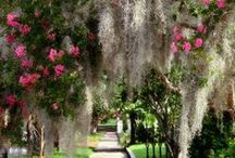 The | South / Savannah, Charleston: all things reminiscent of the distinguished South.