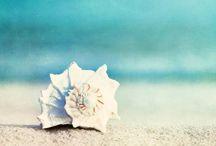 By the Sea / by Nikki Pierce