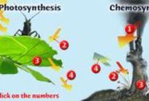Chemosynthesis & Photosynthesis