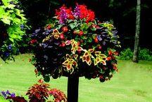 Gardening / by Sherian McCoy-Oakley