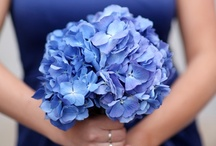 Color: Blue / by WeddingMoons