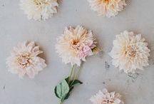 stems / botany varieties and proper names