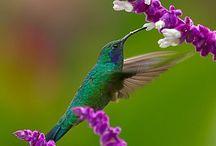 Wings that Sing