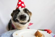 animals / dogs / fotos