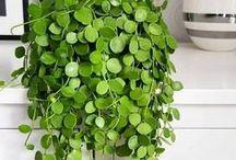 Greenery + Floral / Flowers, Greenery, Faux plants