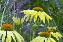 Garden & Botanical
