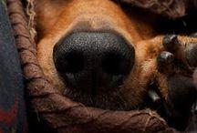 Love a Dog / by Christina Taddeo